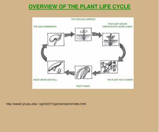 OVERVIEW OF THE PLANT LIFE CYCLE