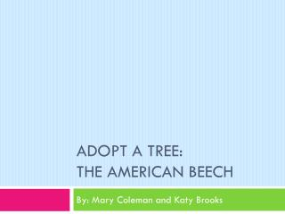 Adopt  a Tree: The  American Beech
