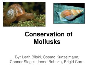 Conservation of Mollusks