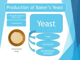 Production of Baker's Yeast