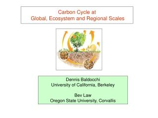 Carbon Cycle at  Global, Ecosystem and Regional Scales