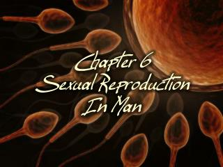 Chapter 6 Sexual Reproduction In Man