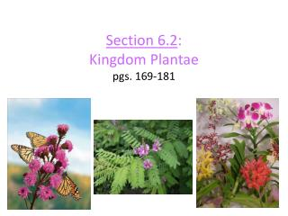 Section 6.2 : Kingdom  Plantae pgs. 169-181