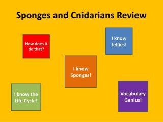 Sponges and Cnidarians Review