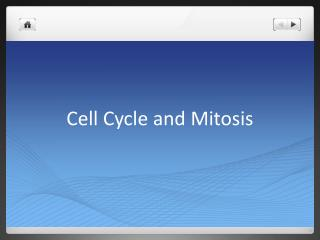 Cell Cycle and Mitosis