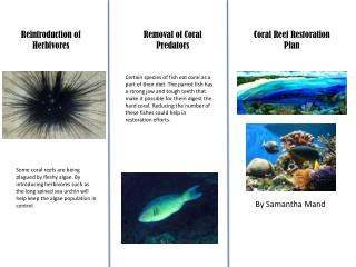 Coral Reef Restoration Plan