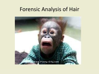 Forensic Analysis of Hair