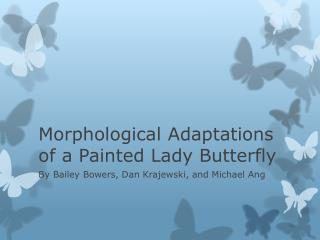 Morphological Adaptations of a Painted Lady Butterfly