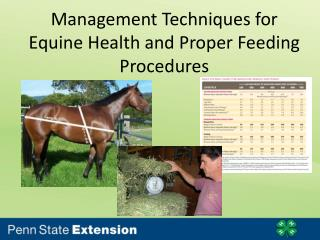 Management Techniques for Equine Health and Proper Feeding Procedures