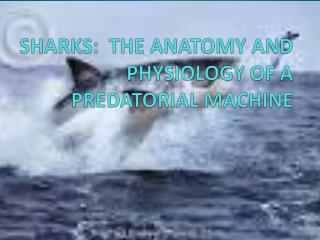 SHARKS:  THE ANATOMY AND PHYSIOLOGY OF A PREDATORIAL MACHINE