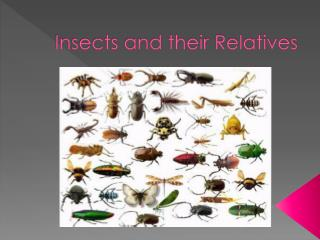 Insects and their Relatives