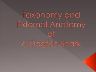 Taxonomy and  External Anatomy of  a Dogfish Shark