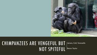 Chimpanzees are vengeful but not spiteful
