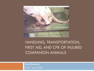 Handling , Transportation, First Aid, and CPR  of Injured Companion Animals