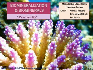 Biomineralization  &  Biominerals