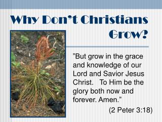 Why Don't Christians Grow?