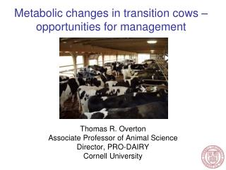 Metabolic changes in transition cows – opportunities for management