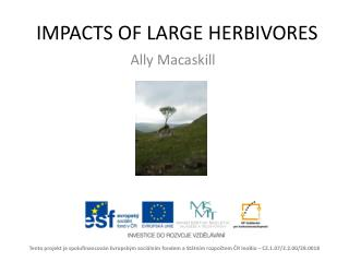 IMPACTS OF LARGE HERBIVORES