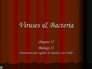 Viruses & Bacteria