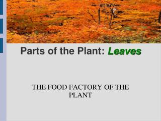 Parts of the Plant:  Leaves