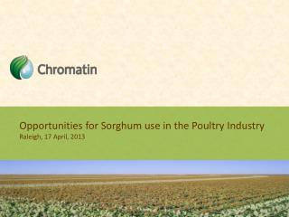 Opportunities for Sorghum use in the Poultry Industry Raleigh, 17 April, 2013
