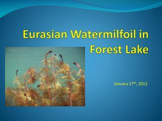 Eurasian Watermilfoil in Forest Lake