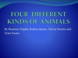 FOUR  DIFFERENT KINDS OF ANIMALS