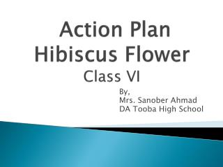 Action Plan Hibiscus Flower Class  VI