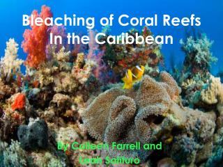 Bleaching of Coral Reefs In the Caribbean