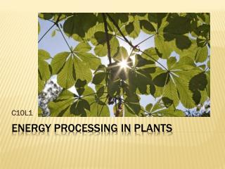 Energy Processing in Plants