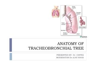 ANATOMY OF TRACHEOBRONCHIAL TREE