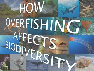HOW  OVERFISHING AFFECTS BIODIVERSITY