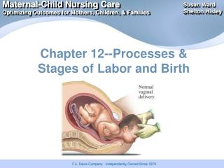 Chapter 12--Processes & Stages of Labor and Birth