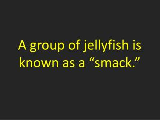 "A group of jellyfish is known as a ""smack."""