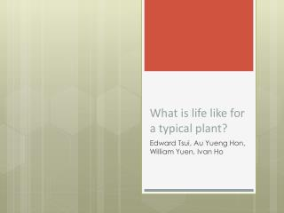 What is life like for a typical plant?