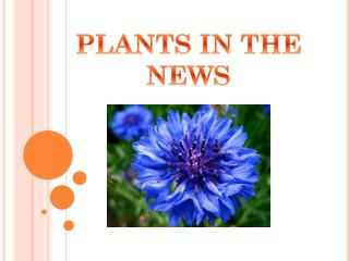 PLANTS IN THE NEWS