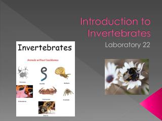 Introduction to Invertebrates