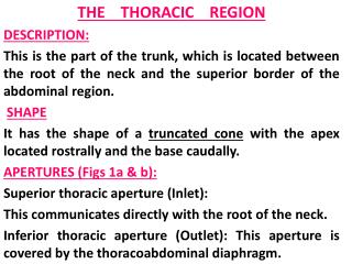 THE    THORACIC     REGION DESCRIPTION: