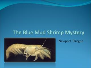 The Blue Mud Shrimp Mystery