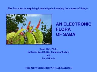 AN ELECTRONIC FLORA OF SABA