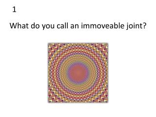 What do you call an immoveable joint?