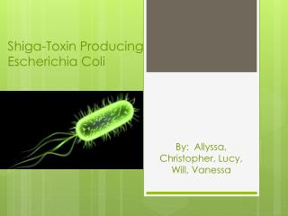 Shiga-Toxin Producing Escherichia Coli