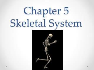 Chapter 5 Skeletal System