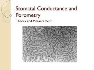 Stomatal Conductance and Porometry