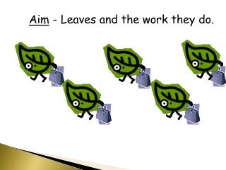 Aim  - Leaves and the work they do.