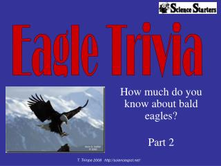 How much do you  know about bald eagles?  Part 2