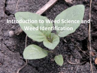Introduction to Weed  S cience and  W eed Identification