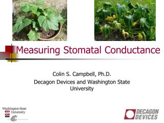 Measuring Stomatal Conductance