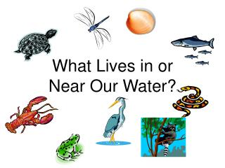 What Lives in or Near Our Water?