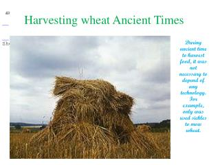 Harvesting wheat Ancient Times